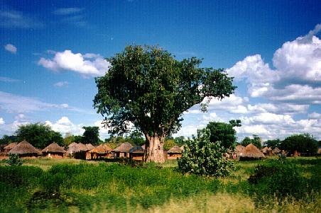 Baobab tree and village