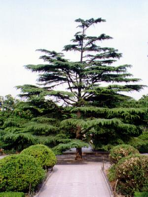Tree in Xingqing Park